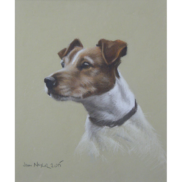 Jack Russell - Pastel