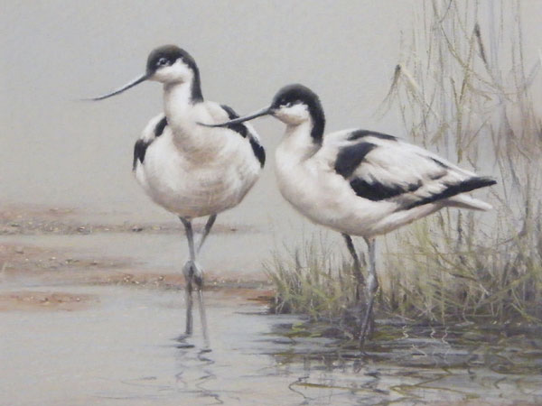 Avocets - Original Pastel