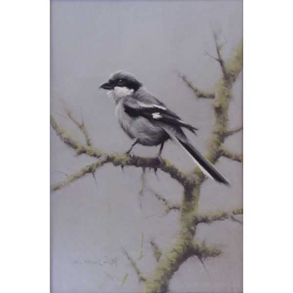 Grey Shrike - Pastel