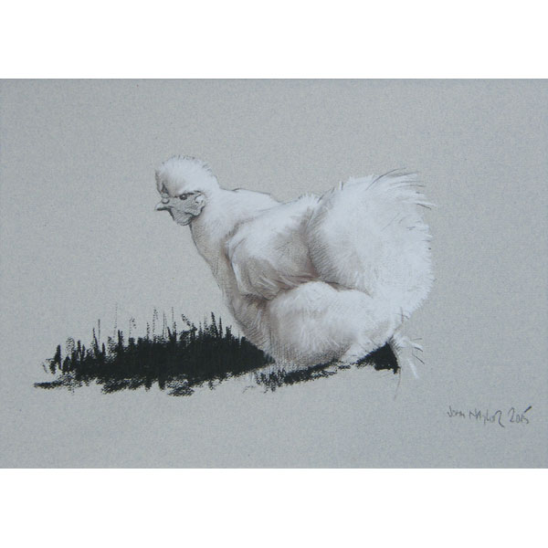 Silkie Bantam - Mixed Media