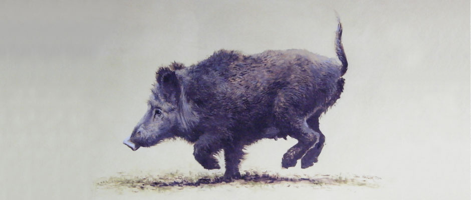 Running Boar - Original Oil
